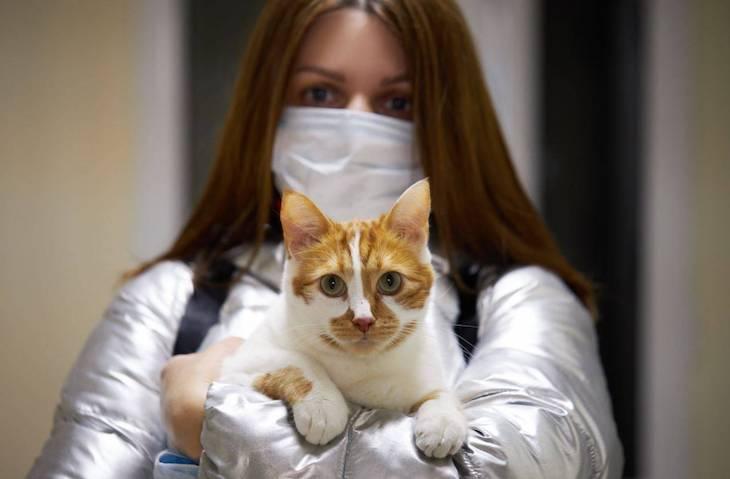 Se multiplican los casos de maltrato animal a causa de la pandemia