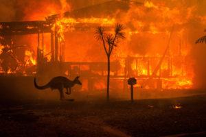 Australia's Bushfire | Foto: Matthew Abbott
